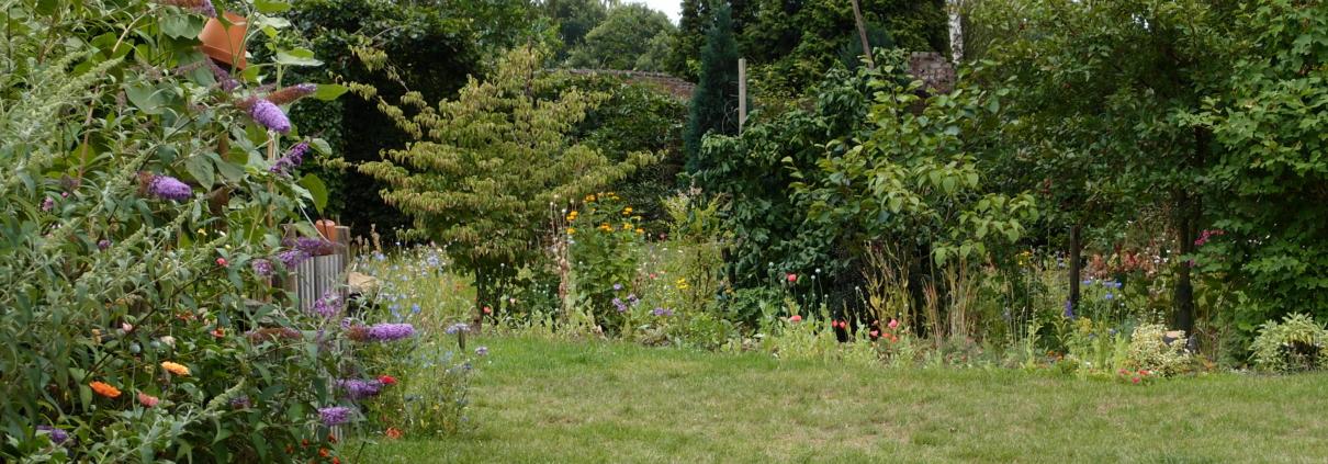 Blog meditatietips voor beginners, tuin Weert