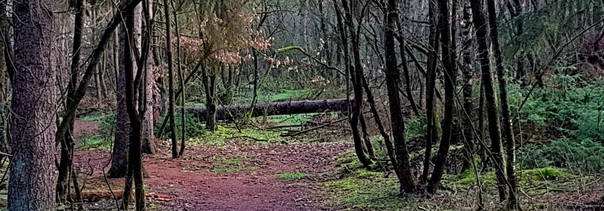 Blog waarom wij niet corrigeren. Sallandse Heuvelrug (2) boom over pad